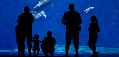 Silhouette of a family watching dolphin. Foreground subject completely in the shade, a family of dolphins in the background.